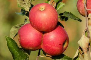 apple-1666113_1920