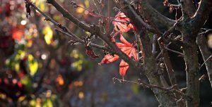herfst-donker